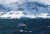Antarctic 3